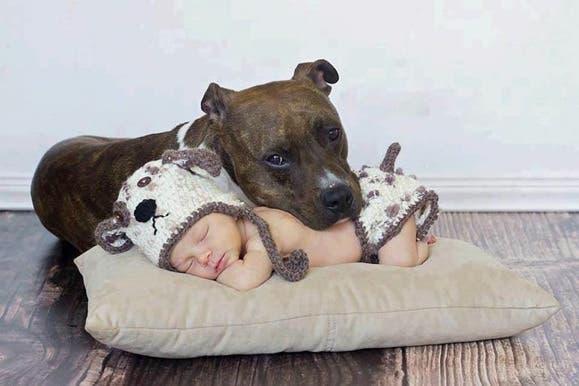 bebes y perros13