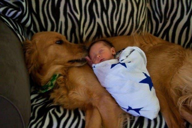 bebes y perros15
