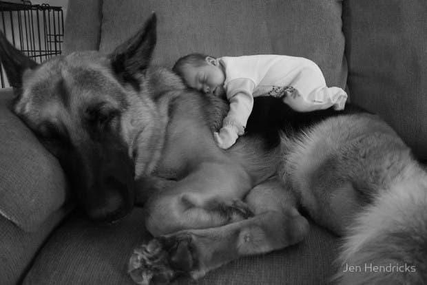 bebes y perros18
