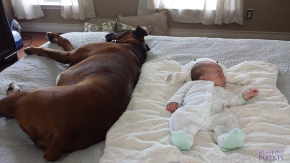 bebes y perros19