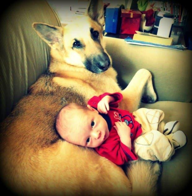 bebes y perros4