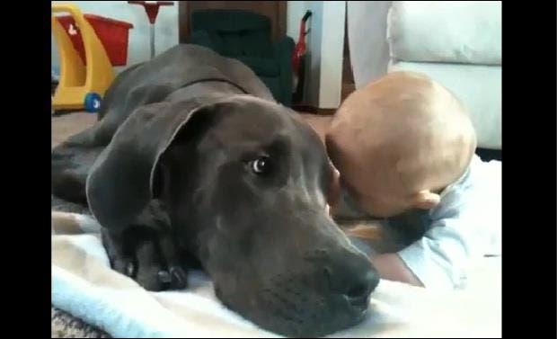 bebes y perros5