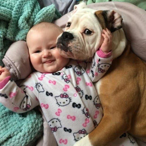 bebes y perros7