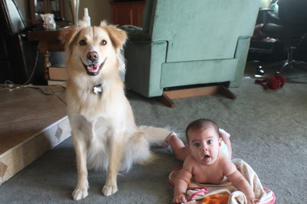 bebes y perros9