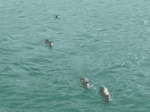 buscando-ballenas1-620x464