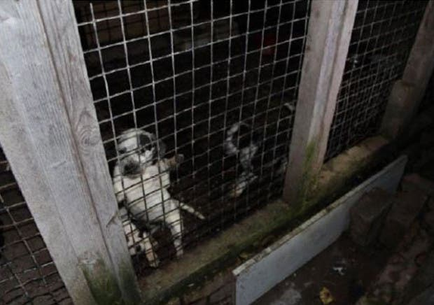 cachorros-maltratados1
