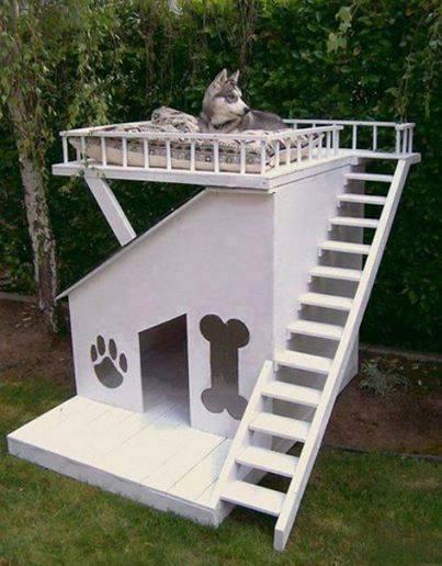 casitas de perros1