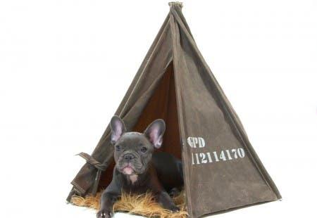 casitas de perros7