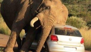 elefante-se-rasca-con-coche