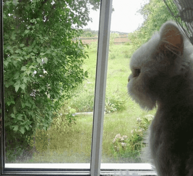 gato16