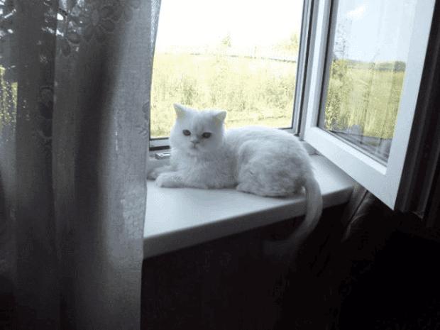 gato22