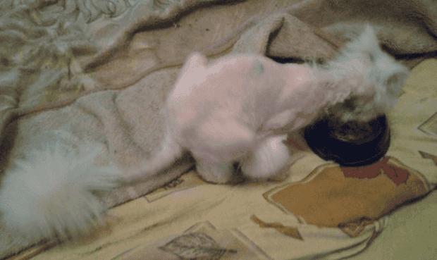 gato9