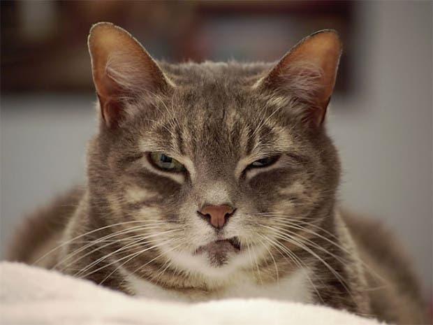 gatos enojados1