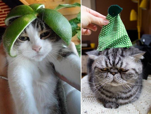 gatos enojados10