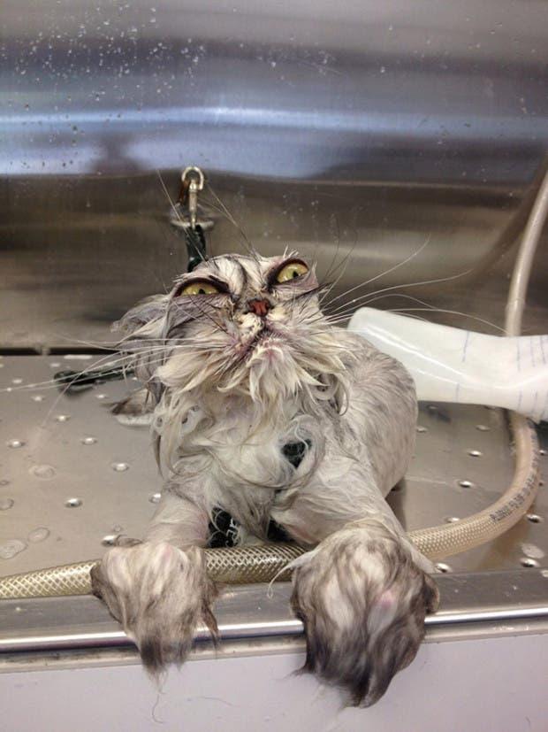 gatos enojados11