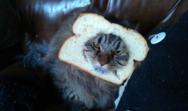 gatos enojados12