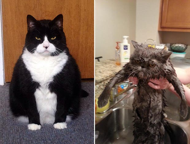 gatos enojados14