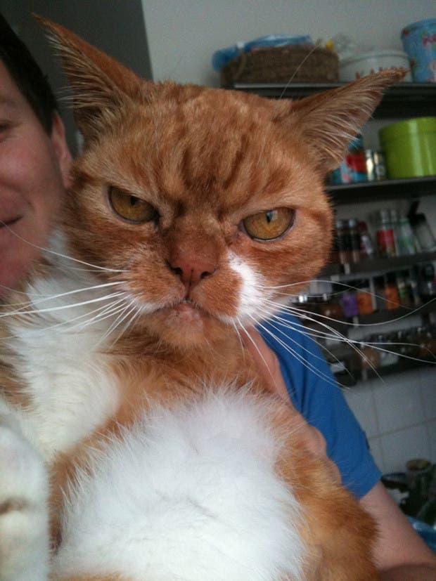 gatos enojados15