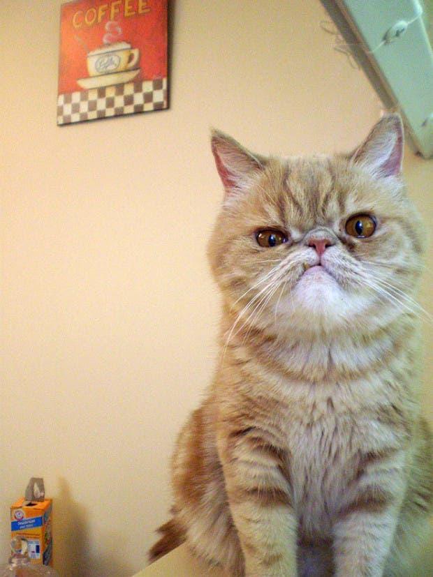 gatos enojados2