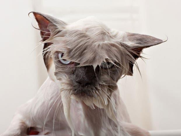 gatos enojados5