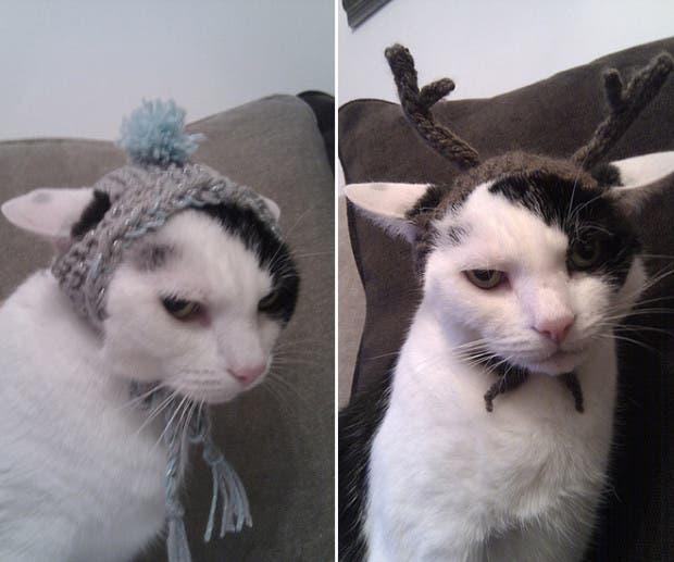 gatos enojados7