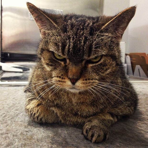 gatos enojados9