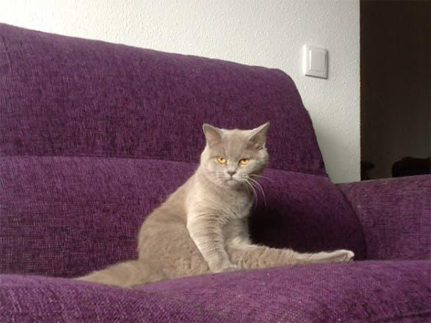 gatos sentados15