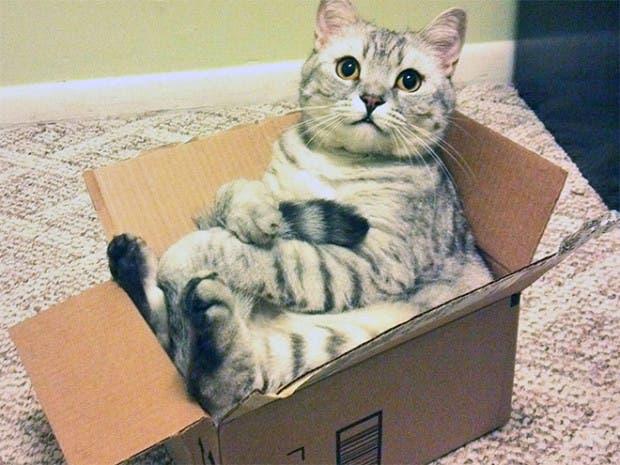 gatos sentados3