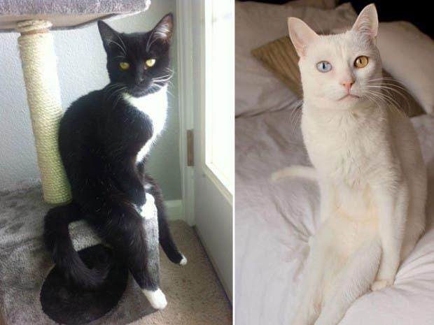 gatos sentados8