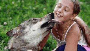 lobos-de-mascota
