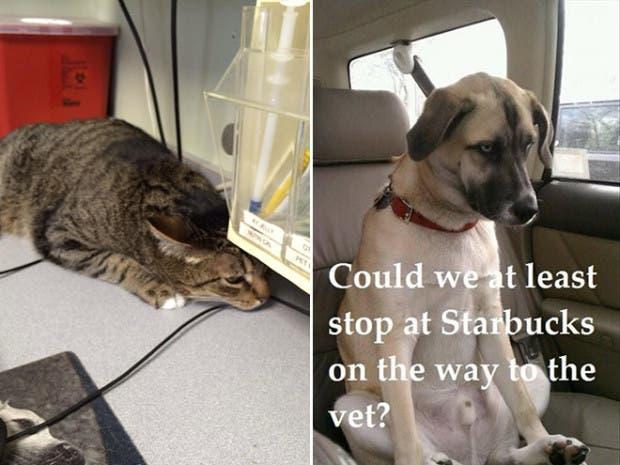 mascotas vet12