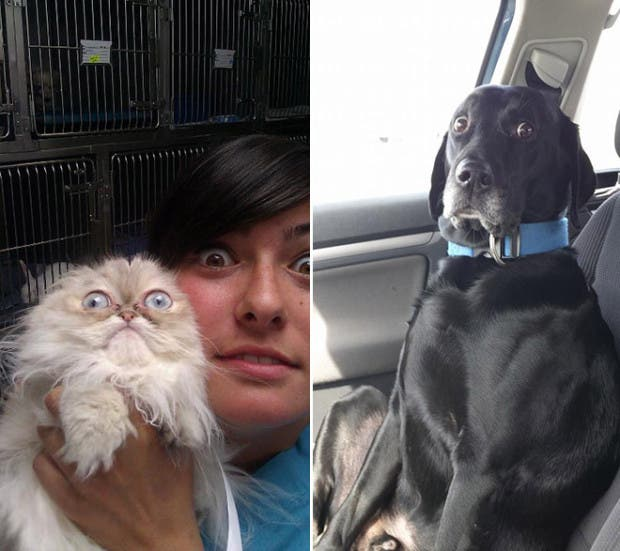 mascotas vet7