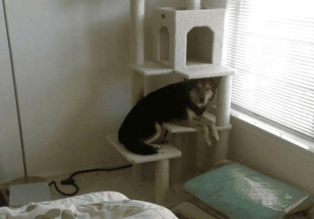 no gatos13
