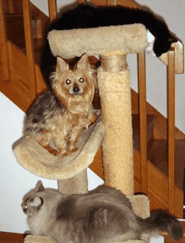 no gatos14