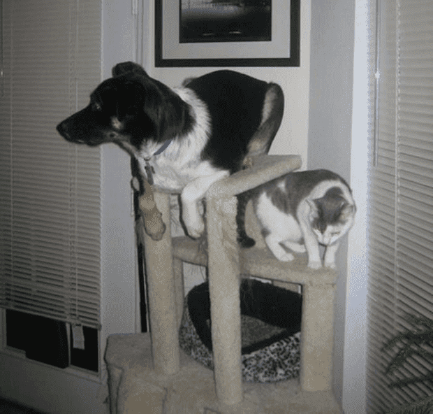 no gatos16