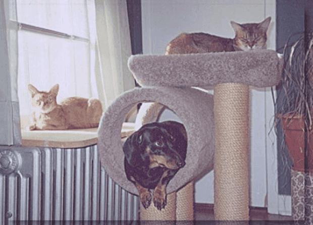 no gatos17