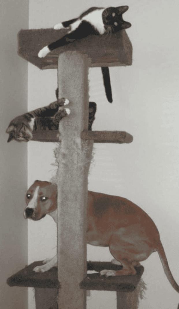 no gatos18