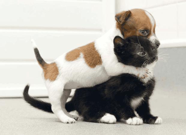 no gatos4