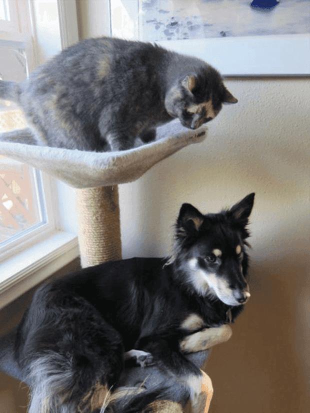no gatos5