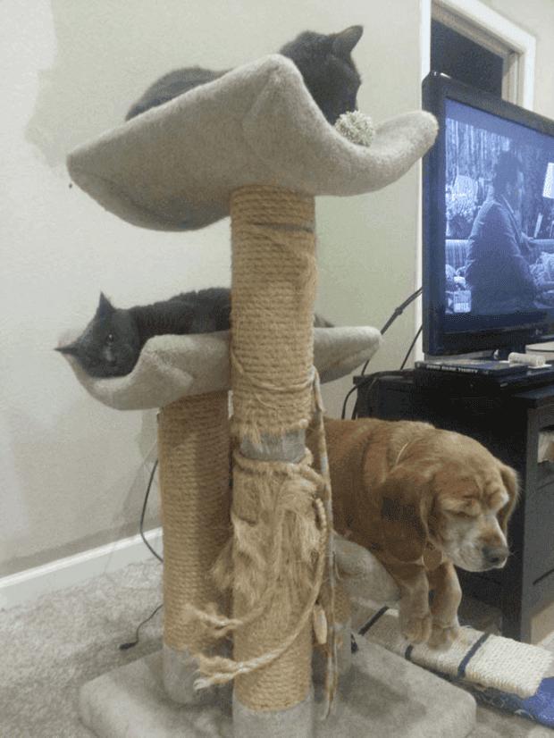 no gatos7