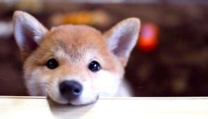 perro-adorable-apoyado