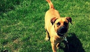 perro-apollo-asesinado-chicago