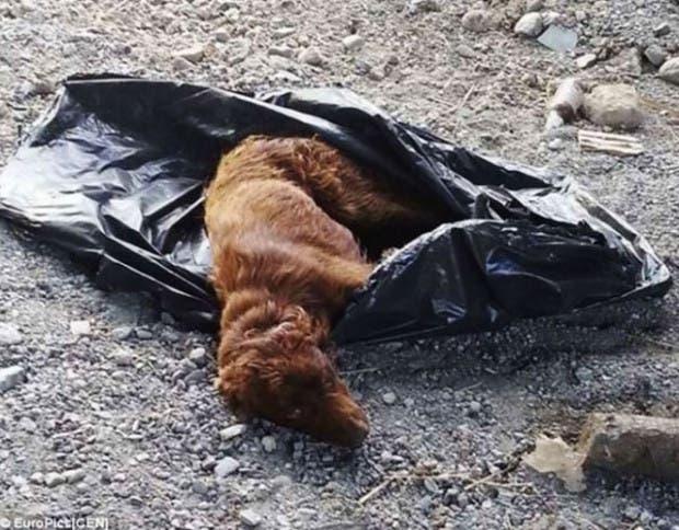 perro-bolsa1