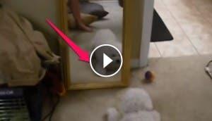 perro-en-el-espejo