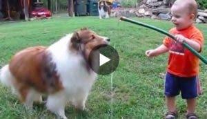 perro-nino-juegan-manguera-play