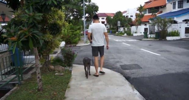 perro-sacrificado