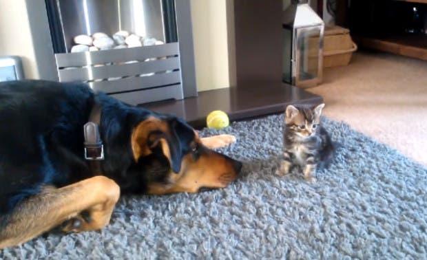 perro y gatito1