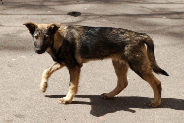 perros-22 (1)