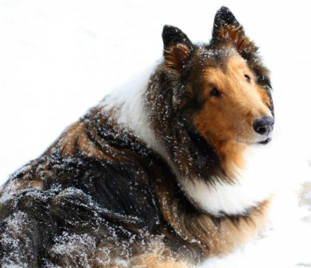 perros-32 (1)