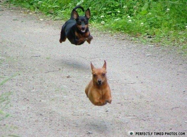 perros divertidos13